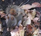 Squirrle1.jpg
