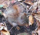 Squirrle2.jpg