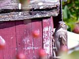 bird house resident