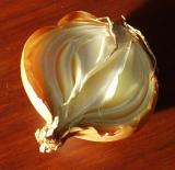 Glowing Onion