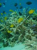 petit jardin de corail