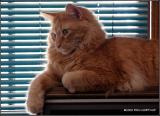 tv-cat-01.jpg