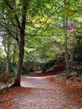 When through the woods…, Stourhead