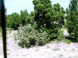 cacti in NM.jpg(245)