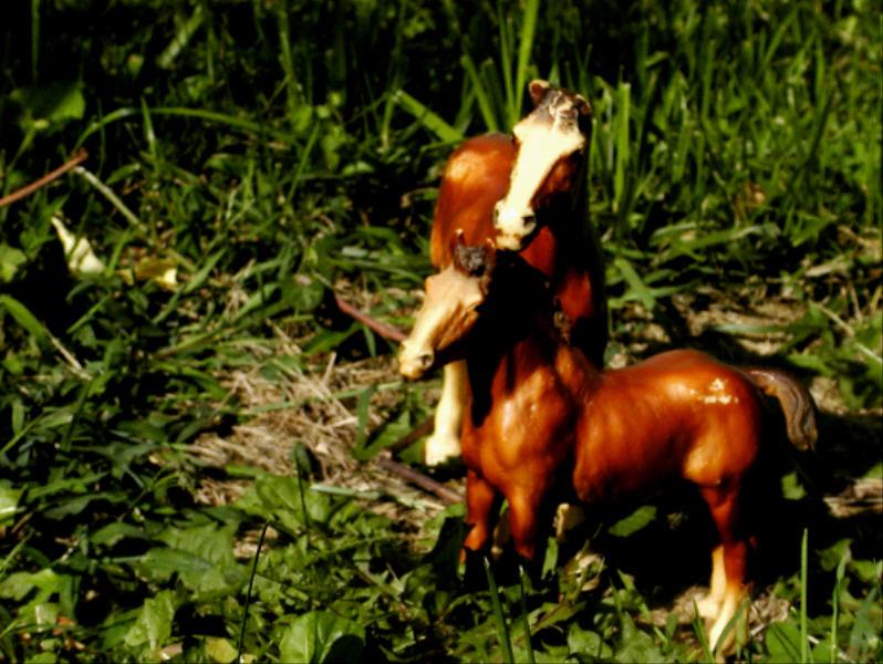 Mom and Foal.jpg(522)