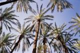 oasis-palmtrees1.jpg