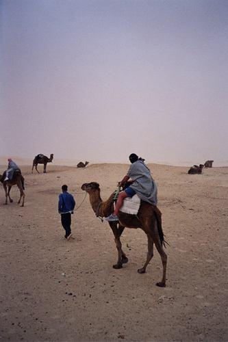 Sahara camel rides