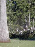 Habitat View
