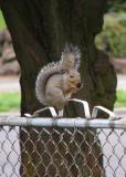 Nut Peelers