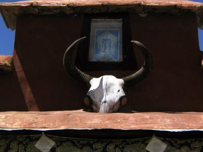 Yak Skull, Lhasa, Tibet, 2004