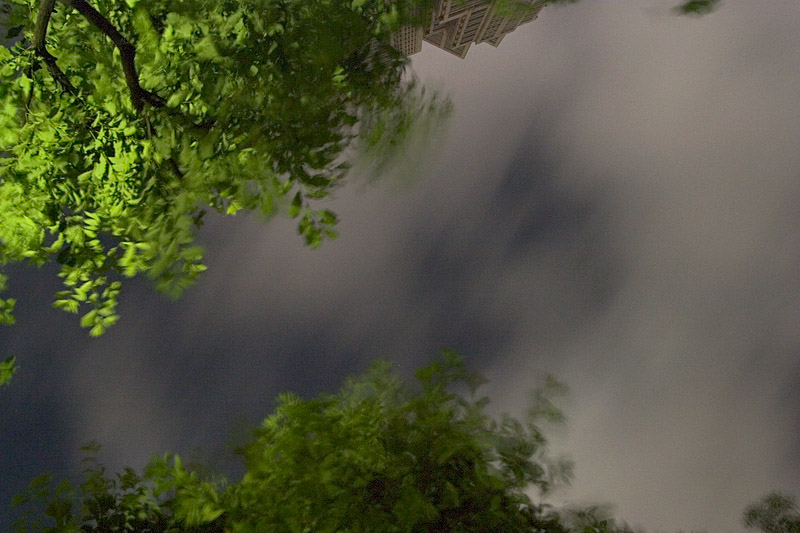 Typhoon Trees/Clouds