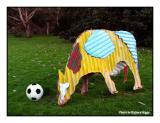 Soccer bull