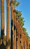 Twenty palms