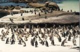 South Africa, 2000 Winter