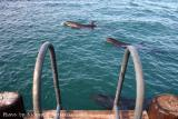 The dolphins resting in the green pool before the show