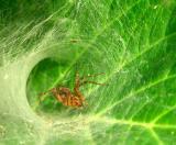 said-the-spider
