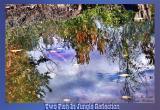 Jungle Reflections