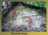 Two Fish in Corner