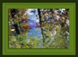 FishForest3813.jpg