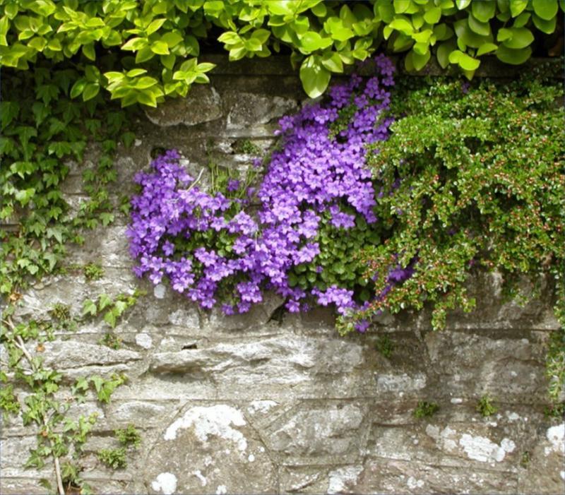 Flower-laden wall in Tralee
