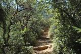 trail on mt tamalpais DSC_0042.jpg