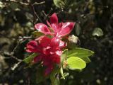 Wild Plant on Mt Tamalpais DSCN4964.jpg