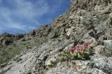 View From Upper Rattlesnake Rd DSC_0025.jpg