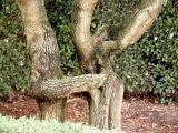 Short Table Tree 03.jpg
