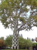Basket Tree 2 03.jpg