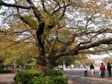 Japan 2003