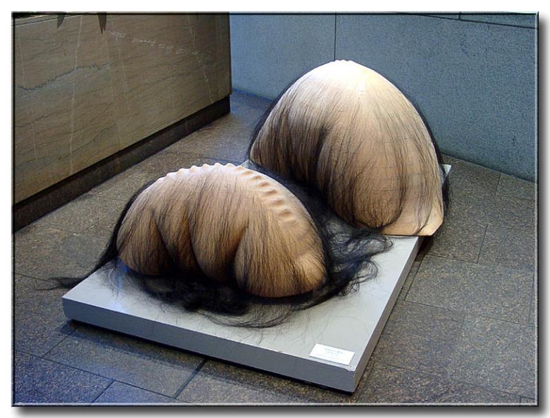 Hairy Creatures