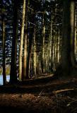 Impounding Forest.jpg