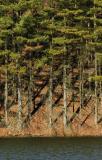 Impounding Pines PM.jpg