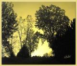 Aurora Borealis turns Night into Day