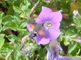 moth11c-s.jpg
