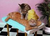 Cat Heaven...
