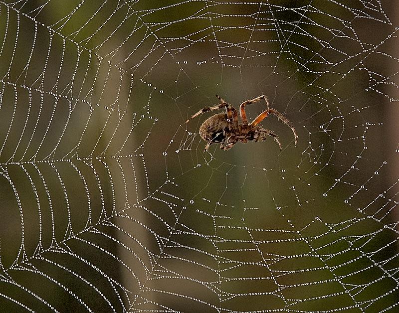 Spider-in-Web.jpg
