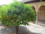 Emir's Oranges