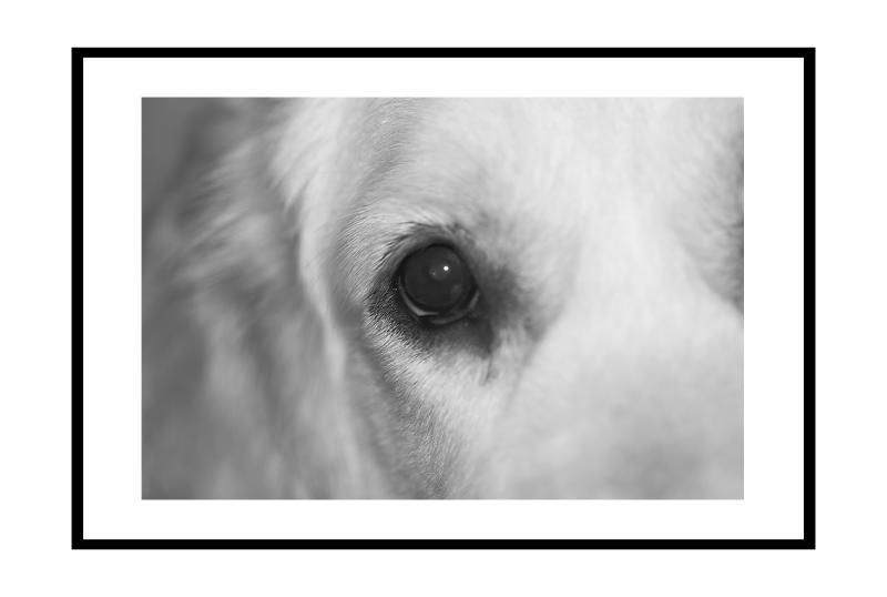 <b>All the Dogs Fault (1914)</b> *<br>by Catherine Reymond (Wismie)