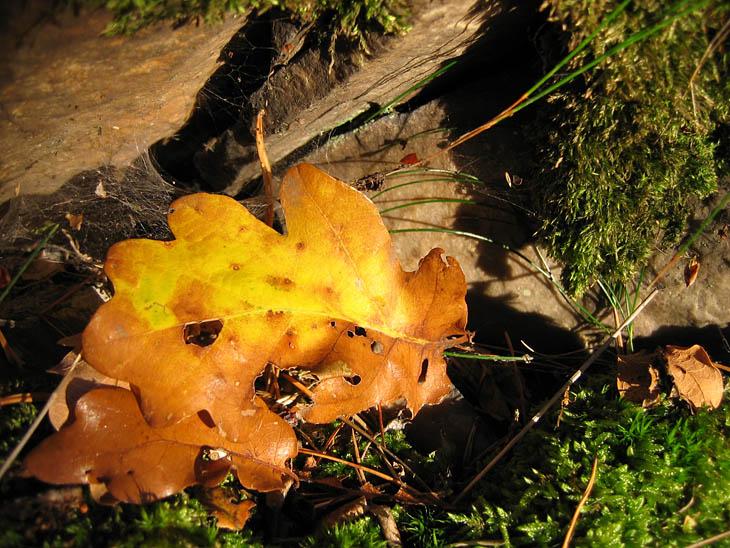Autumn leaves*