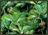Palms Big Island Hawaii.jpg