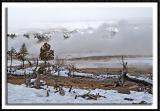 Yellowstone's Stark Landscape