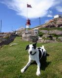 Joop's Dog Log - Thursday July 22