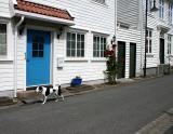 Joop's Dog Log - Monday July 26