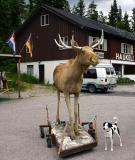 Joop's Dog Log - Tuesday July 27