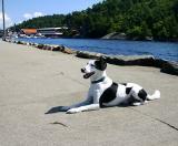 Joop's Dog Log - Wednesday July 28