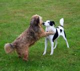 Joop's Dog Log - Thursday July 29