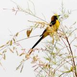 IMG_2240 birds.jpg