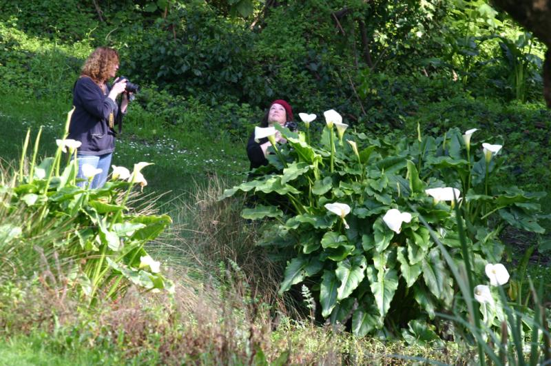 Jeanne and Cheryl among the Lilies