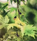 Lisa's Yellow Bird